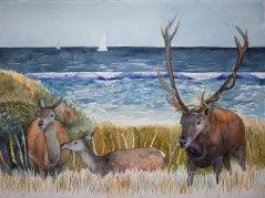 Hirschbbrunft an der Ostsee (c) Aquarell von FRank Koebsch